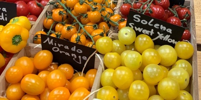 Tipps und Tricks zur Tomatenkultur