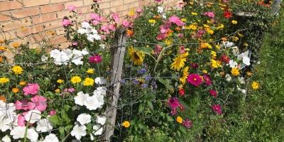 Bodensee Blütenträume
